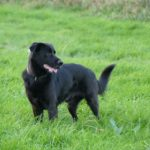 Förderung der Anschaffung von Herdenschutzhunden