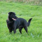 Dümmliche Nachfragen statt Rückbesinnung auf Herdenschutzhunde
