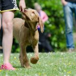 Die Sachkunde des Hundetrainers