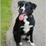 Mit Hund auf Reisen - Teil 1: Die Reiserücktrittsversicherung