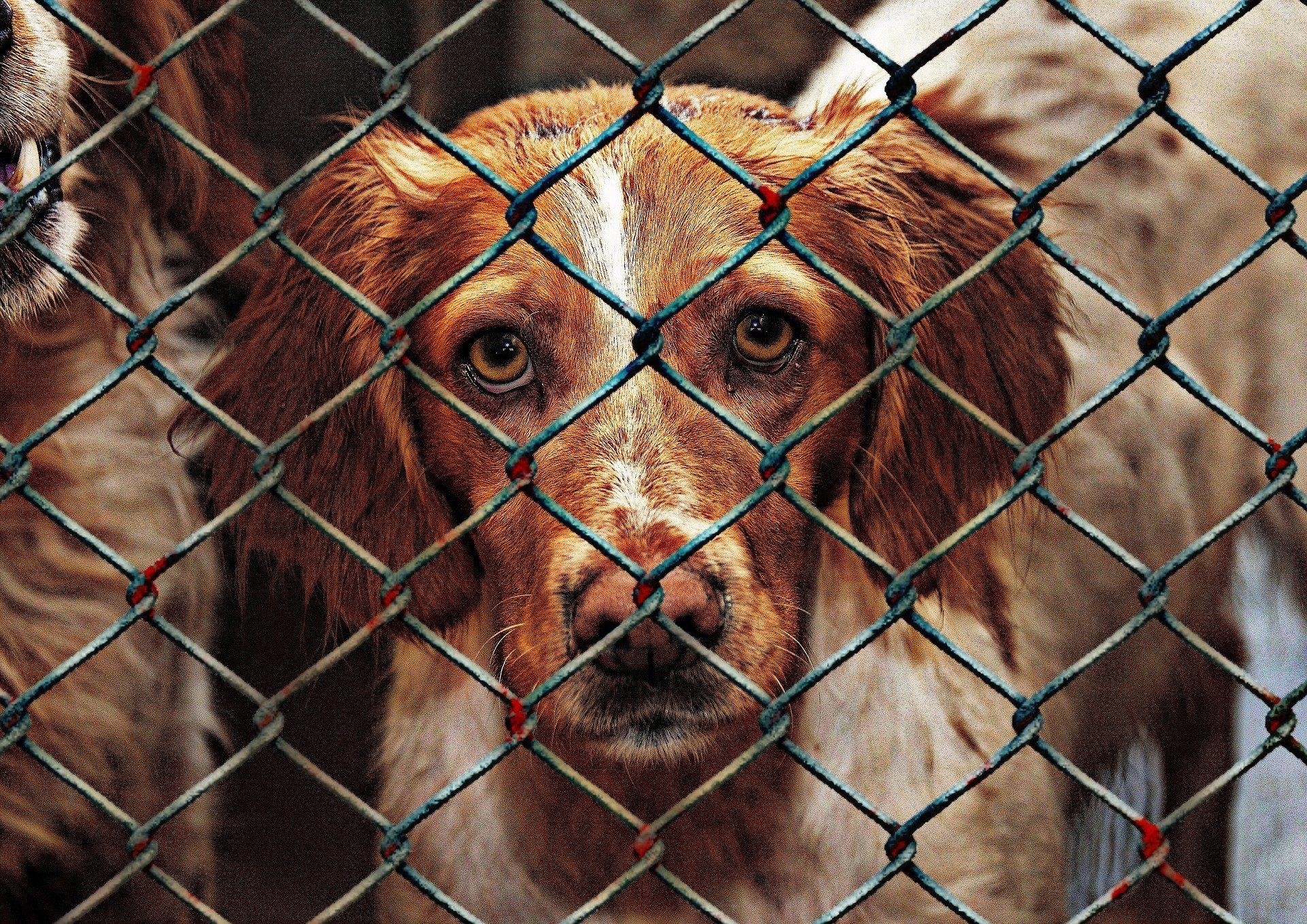 Der Hund aus dem Tierschutz aus dem Ausland